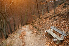 Autumn Park with a lonely bench Royalty Free Stock Images