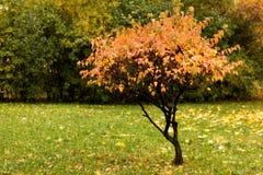 Autumn park lonely tree Stock Photo