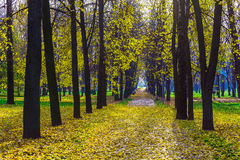 Autumn Park with Long Alley Covered Fallen Foliage Royalty Free Stock Photos