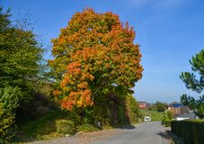 Autumn park in Luzern, Switzerland royalty free stock image