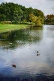 Autumn Park med dammet och änder i djupen av den stads- djungeln Royaltyfria Bilder