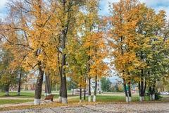 Autumn Park med guling- och gräsplanlövverk Arkivbild