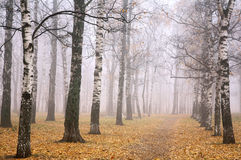 Autumn park in mist weather Stock Photo