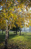 Autumn in a park. Misty autumn morning in a park Stock Photography