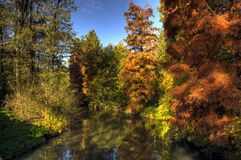 Autumn in the Park, Monza, Italy. A HDR image of colorful autumn trees in the Park of Monza, Italy Stock Photography