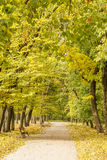 Autumn park in morning Royalty Free Stock Images