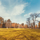 Autumn park in morning Royalty Free Stock Image