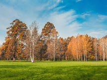 Autumn park in morning Royalty Free Stock Photography