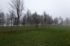 Autumn park .  morning. The city park in autumn season photographed in the morning Stock Image