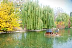 Autumn park in Myrhorod, Ukraine royalty free stock photo