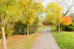 Autumn in a park with a Nice coloured tree and a pathway Royalty Free Stock Image