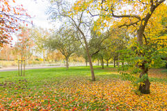 Autumn in a park with a Nice coloured tree and a pathway Royalty Free Stock Images