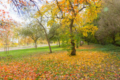 Autumn in a park with a Nice coloured tree and a pathway Stock Photography