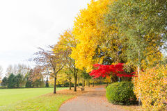 Autumn in a park with a Nice coloured tree and a pathway Stock Image