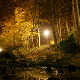 Autumn park at night Stock Image