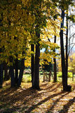 Autumn park and old gate Stock Photo