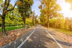 Autumn Park omvat met gele bladeren en steenbrug stock foto's