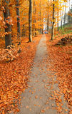 Autumn park with orange leaves on ground and park footpath Royalty Free Stock Photo