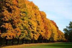 Autumn Park orizzontale Immagine Stock