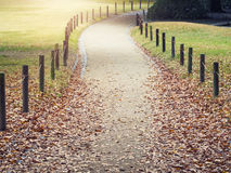 Autumn Park outdoor walkway Seasonal Nature Background Royalty Free Stock Images