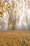 Autumn Park, overcast. A park in the autumn, during cloudy weather, late autumn, defocused Royalty Free Stock Photo