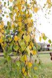 Autumn Park, overcast Stock Photography