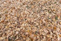 Autumn Park, overcast Stock Images