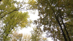 In the autumn Park. Panorama of the tops of the trees in autumn Park stock footage