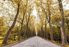 Autumn park passage Royalty Free Stock Photography