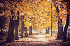 Autumn Park path Royalty Free Stock Photos