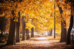 Autumn Park path. Golden leaves on trees royalty free stock photo