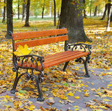 autumn park with paths and benches Royalty Free Stock Photos