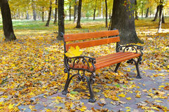 autumn park with paths and benches Stock Images