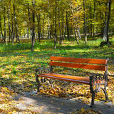 Autumn park with paths and benches Royalty Free Stock Image