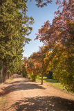 Autumn park pathway under the trees stock image