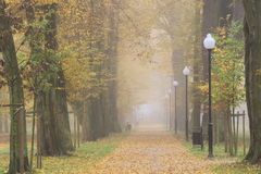 Autumn in the park. Stock Image
