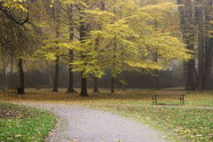 Autumn in the park. Royalty Free Stock Photo