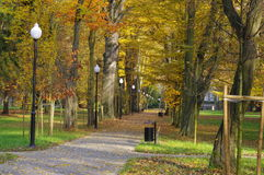 Autumn in the park. Stock Images