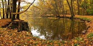 Autumn park and pond. And mist Royalty Free Stock Photography