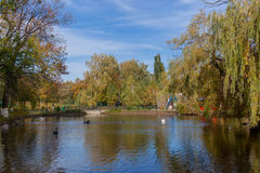 Autumn park with pond Stock Photography