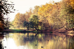Autumn park with pond. Fall landscape. Stock Images
