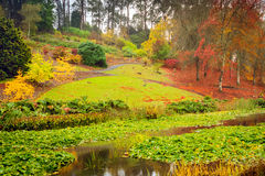 Autumn park with pond during the rain Royalty Free Stock Photography