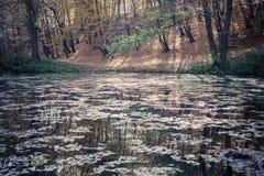 Autumn park and pond Stock Photo