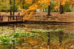 Autumn park pond trees bridge Stock Images