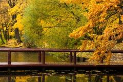 Autumn park pond trees Royalty Free Stock Photos