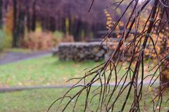 Autumn park after rain Royalty Free Stock Photography