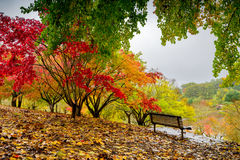 Autumn park during the rain Stock Image