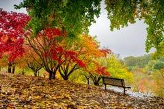 Autumn park during the rain Stock Image