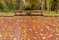Autumn park. Rainy weather Stock Image