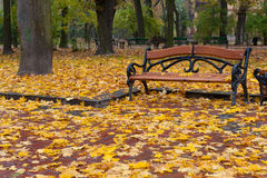 Autumn park. Rainy weather Royalty Free Stock Photography